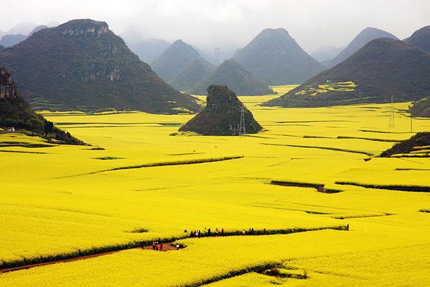 Campo de flor de canola, China