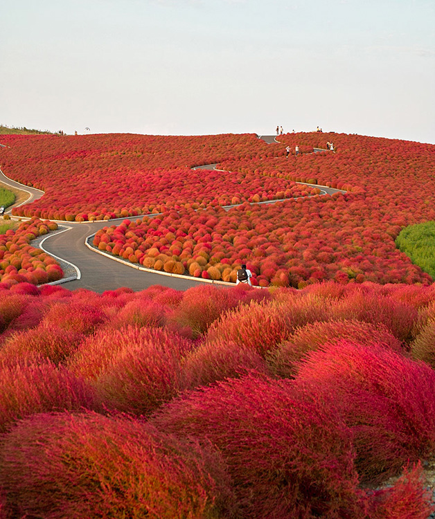 Hitachi Seaside Park, Japão